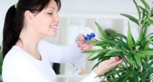 нормы влажности для растений в комнате